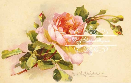 Catherine Klein Pink Roses 5x7 Download