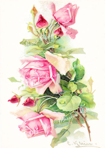 Pink Roses Klein Print Victorian Print 5x7
