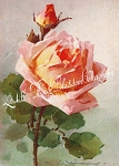 Peachy Pink Catherine Klein Print or Digital Download 5x7