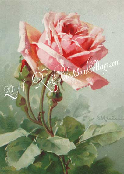 Pink Rose and Rosebuds Catherine Klein Print or Digital Download 5x7