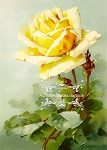 Victorian Era Print Yellow Remembrance Rose Downloadable 5x7