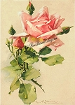 $1 Test Sample Antique Romantic Prints Roses Klein